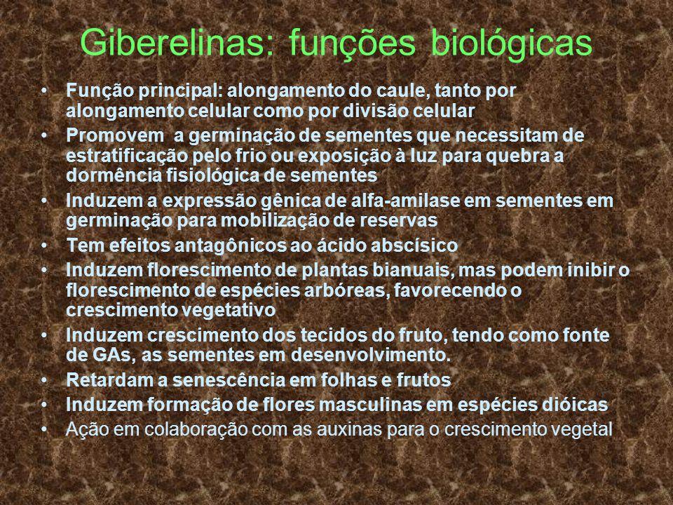 Giberelinas: funções biológicas