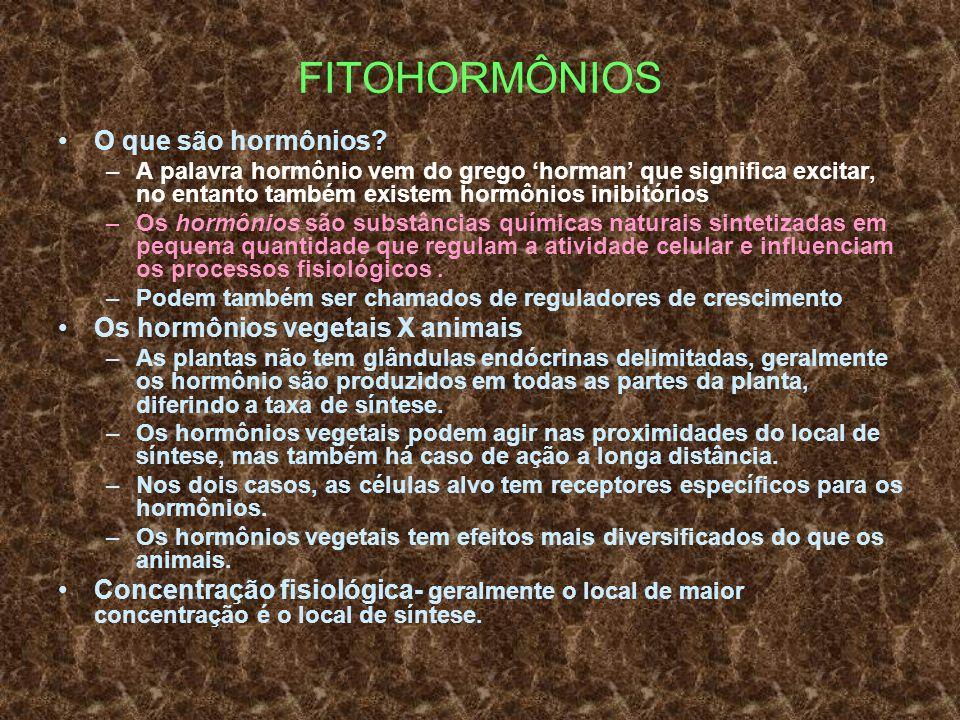 FITOHORMÔNIOS O que são hormônios Os hormônios vegetais X animais