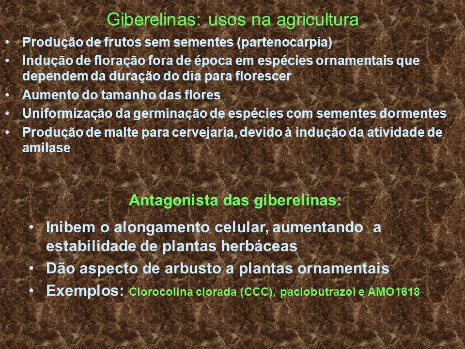 Giberelinas: usos na agricultura