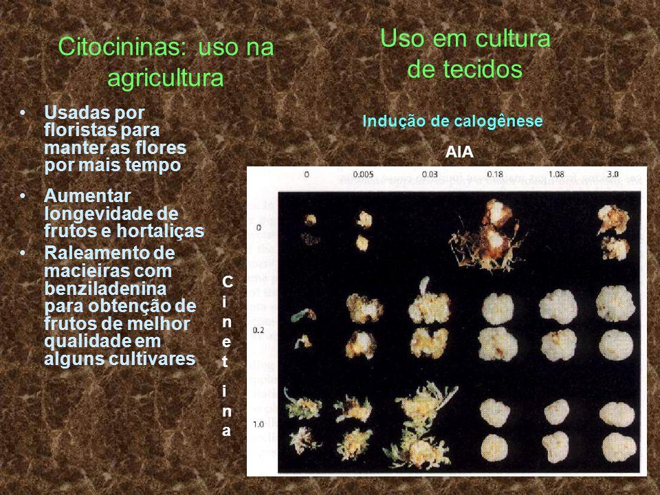 Citocininas: uso na agricultura