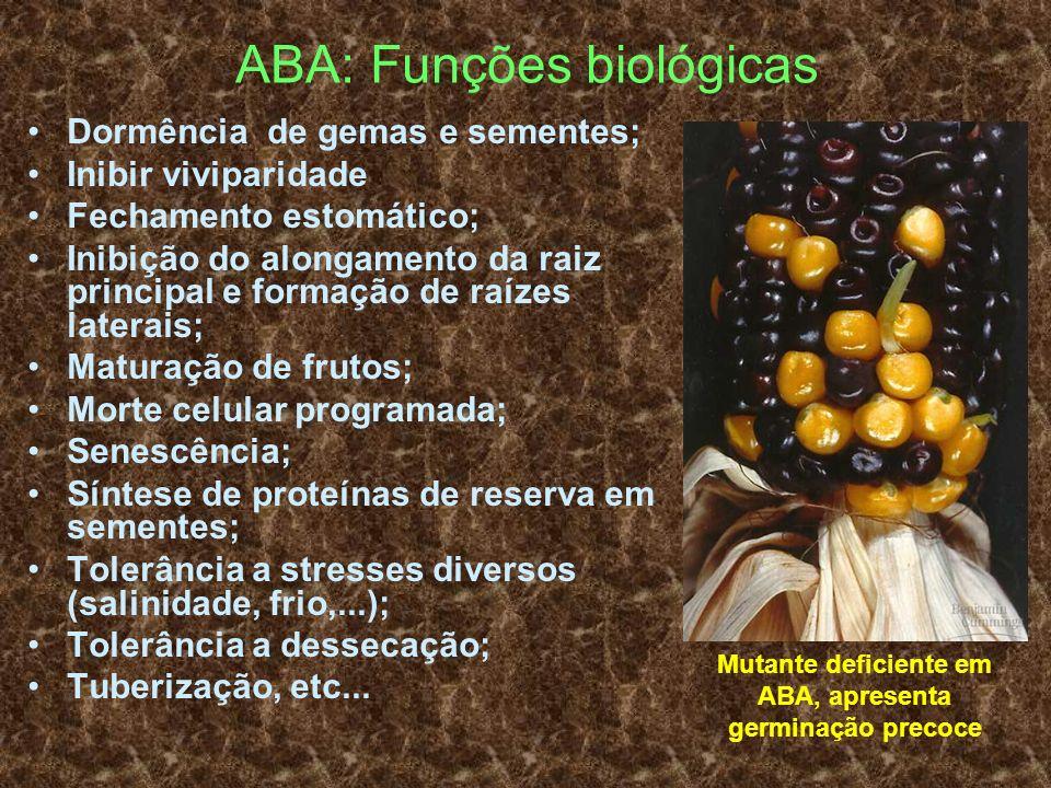 ABA: Funções biológicas