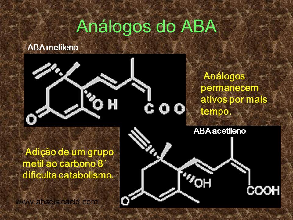 Análogos do ABA Análogos permanecem ativos por mais tempo.