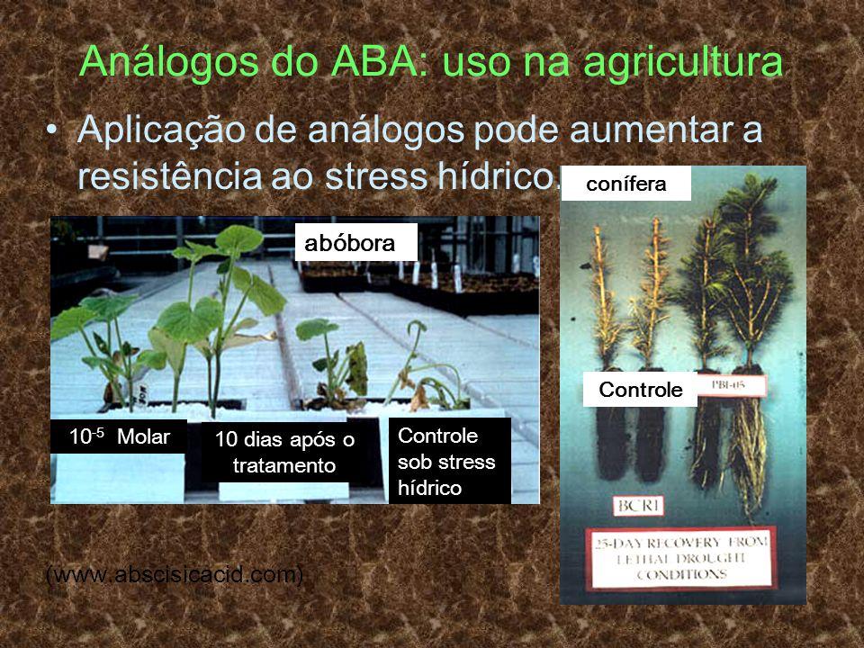 Análogos do ABA: uso na agricultura