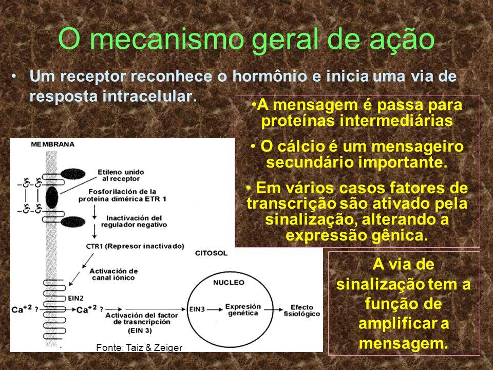 O mecanismo geral de ação