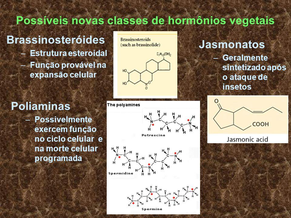 Possíveis novas classes de hormônios vegetais