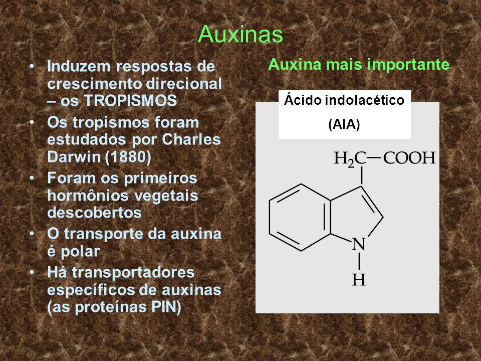 Auxinas Auxina mais importante