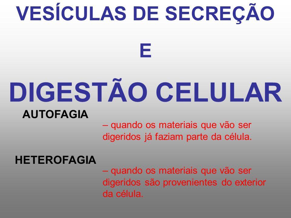 DIGESTÃO CELULAR VESÍCULAS DE SECREÇÃO E AUTOFAGIA HETEROFAGIA