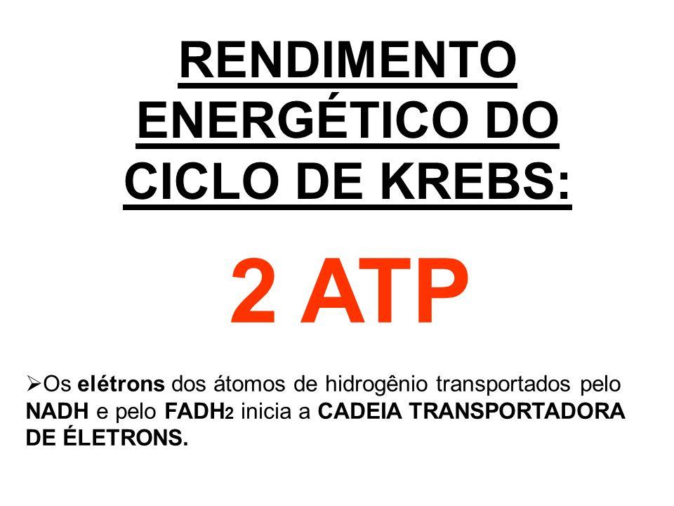 RENDIMENTO ENERGÉTICO DO CICLO DE KREBS: