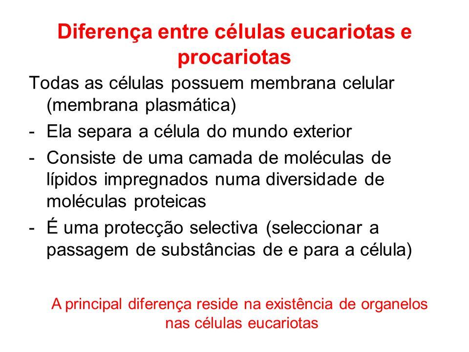 Diferença entre células eucariotas e procariotas