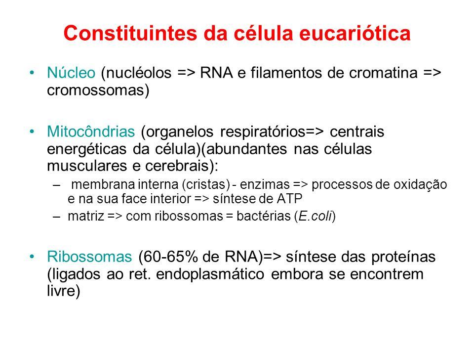 Constituintes da célula eucariótica