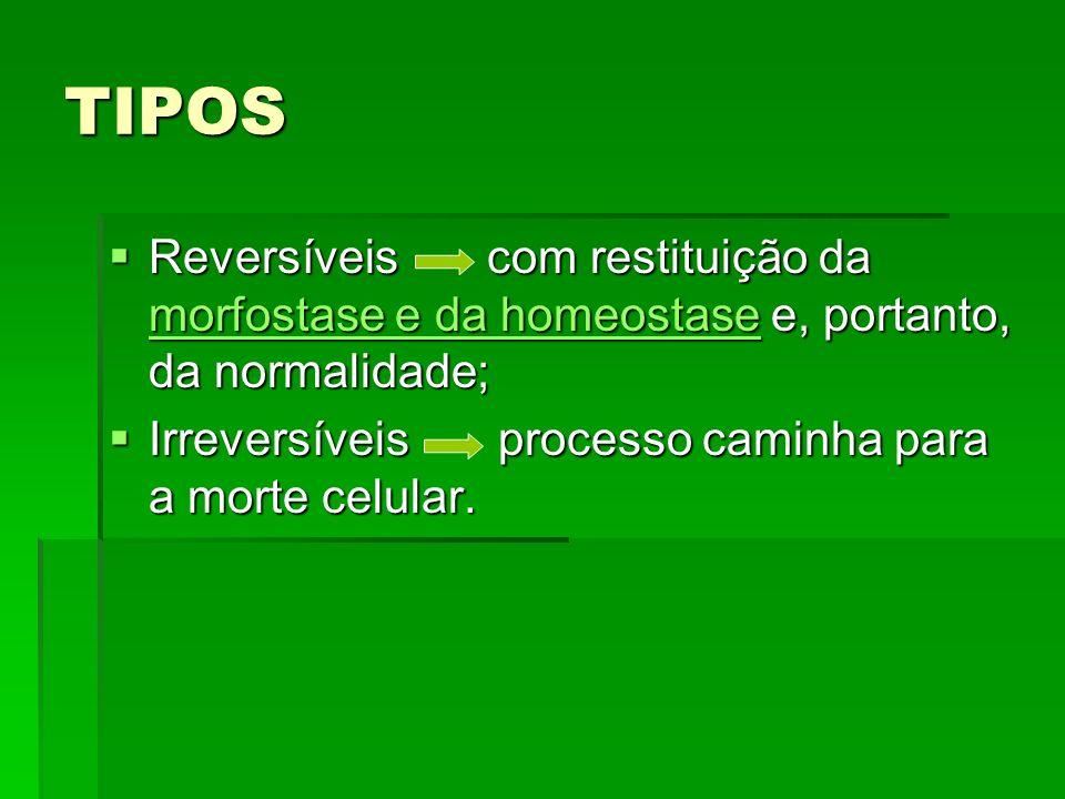 TIPOS Reversíveis com restituição da morfostase e da homeostase e, portanto, da normalidade;