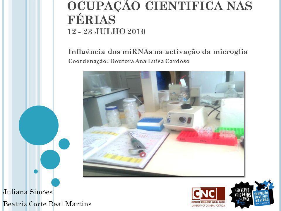 OCUPAÇÃO CIENTIFICA NAS FÉRIAS 12 - 23 JULHO 2010