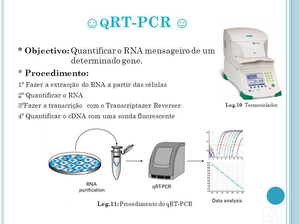 Leg.11: Procedimento do qRT-PCR