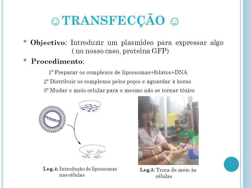 ☺TRANSFECÇÃO ☺ * Objectivo: Introduzir um plasmídeo para expressar algo ( no nosso caso, proteína GFP)