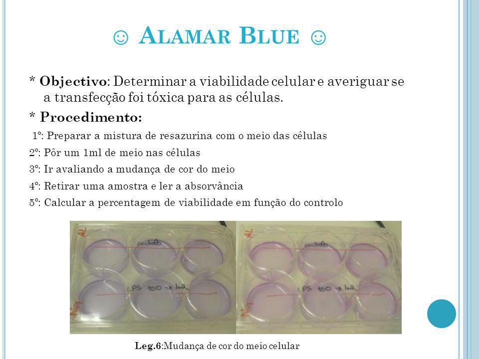 ☺ Alamar Blue ☺ * Objectivo: Determinar a viabilidade celular e averiguar se a transfecção foi tóxica para as células.