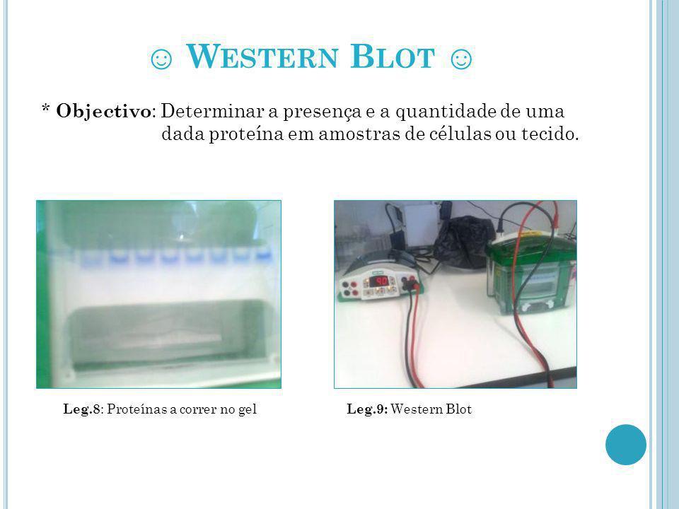 ☺ Western Blot ☺ * Objectivo: Determinar a presença e a quantidade de uma dada proteína em amostras de células ou tecido.