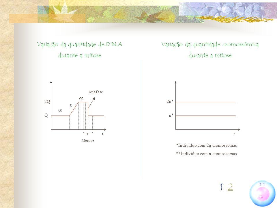 1 2 Variação da quantidade de D.N.A durante a mitose