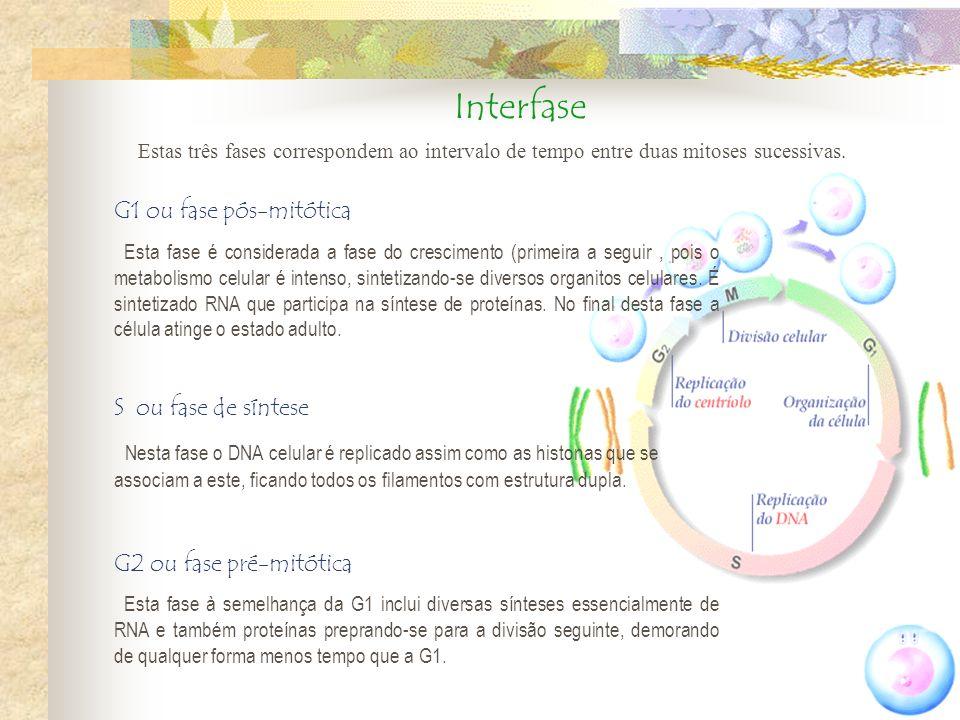 Interfase G1 ou fase pós-mitótica S ou fase de síntese