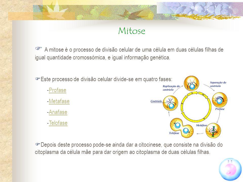 Mitose A mitose é o processo de divisão celular de uma célula em duas células filhas de igual quantidade cromossómica, e igual informação genética.