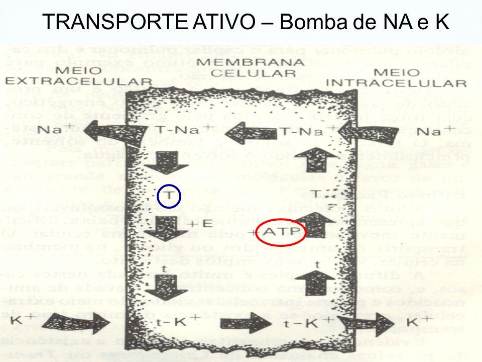 TRANSPORTE ATIVO – Bomba de NA e K