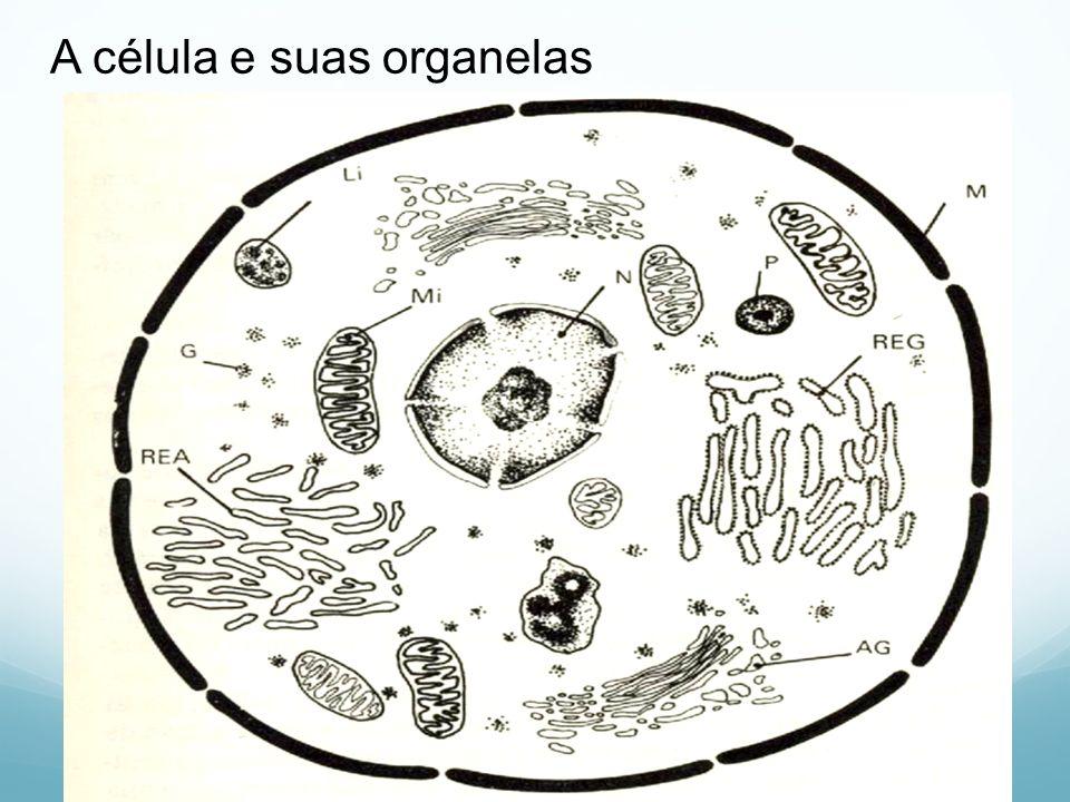 A célula e suas organelas