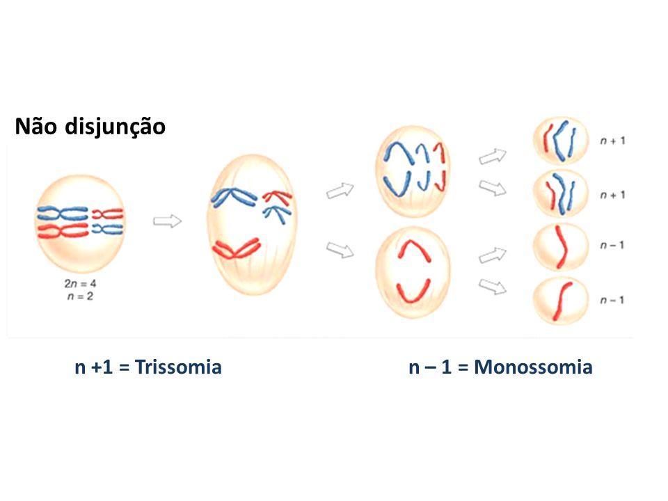 n +1 = Trissomia n – 1 = Monossomia