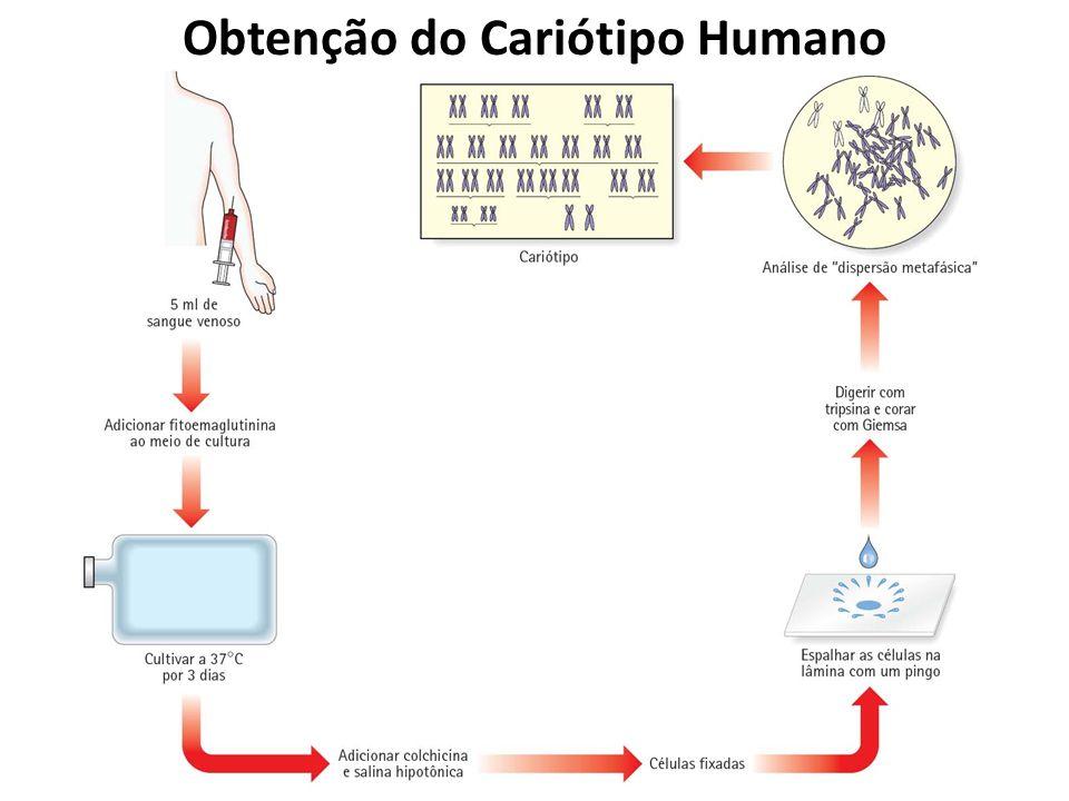 Obtenção do Cariótipo Humano
