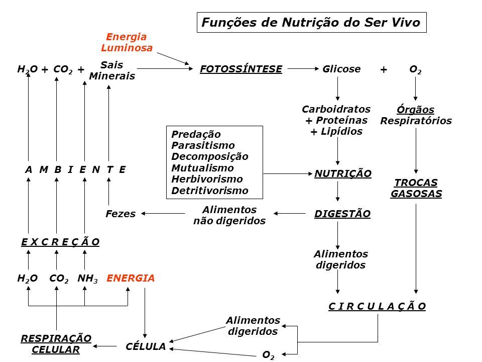 Funções de Nutrição do Ser Vivo