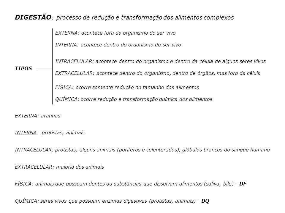 DIGESTÃO: processo de redução e transformação dos alimentos complexos