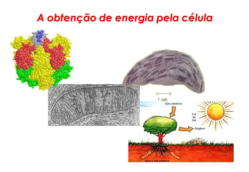 A obtenção de energia pela célula