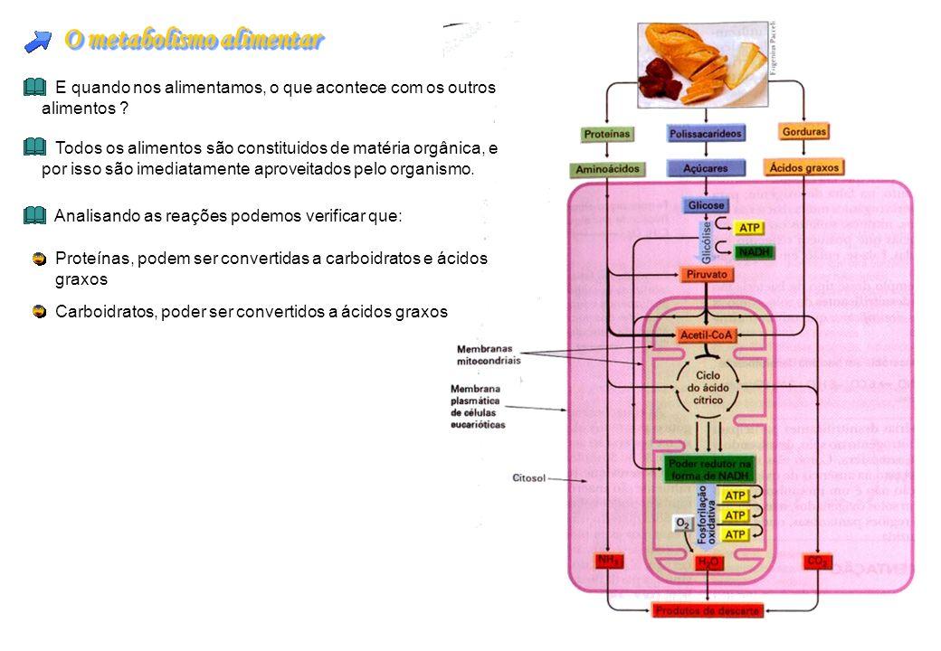 O metabolismo alimentar