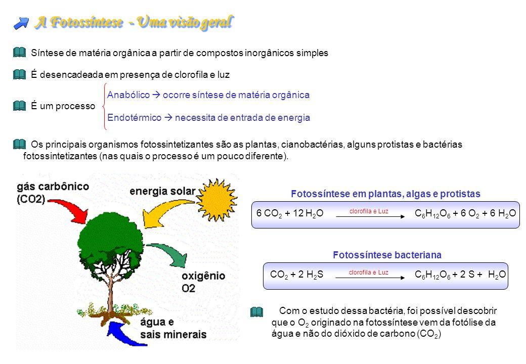 A Fotossíntese - Uma visão geral
