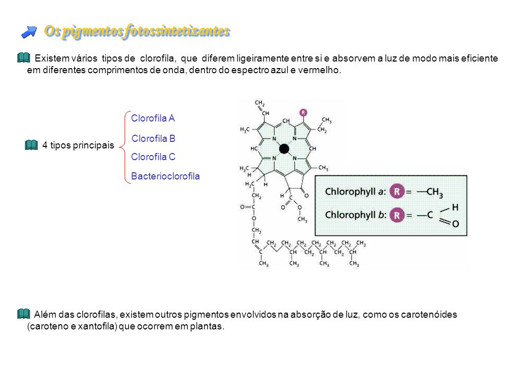 Os pigmentos fotossintetizantes