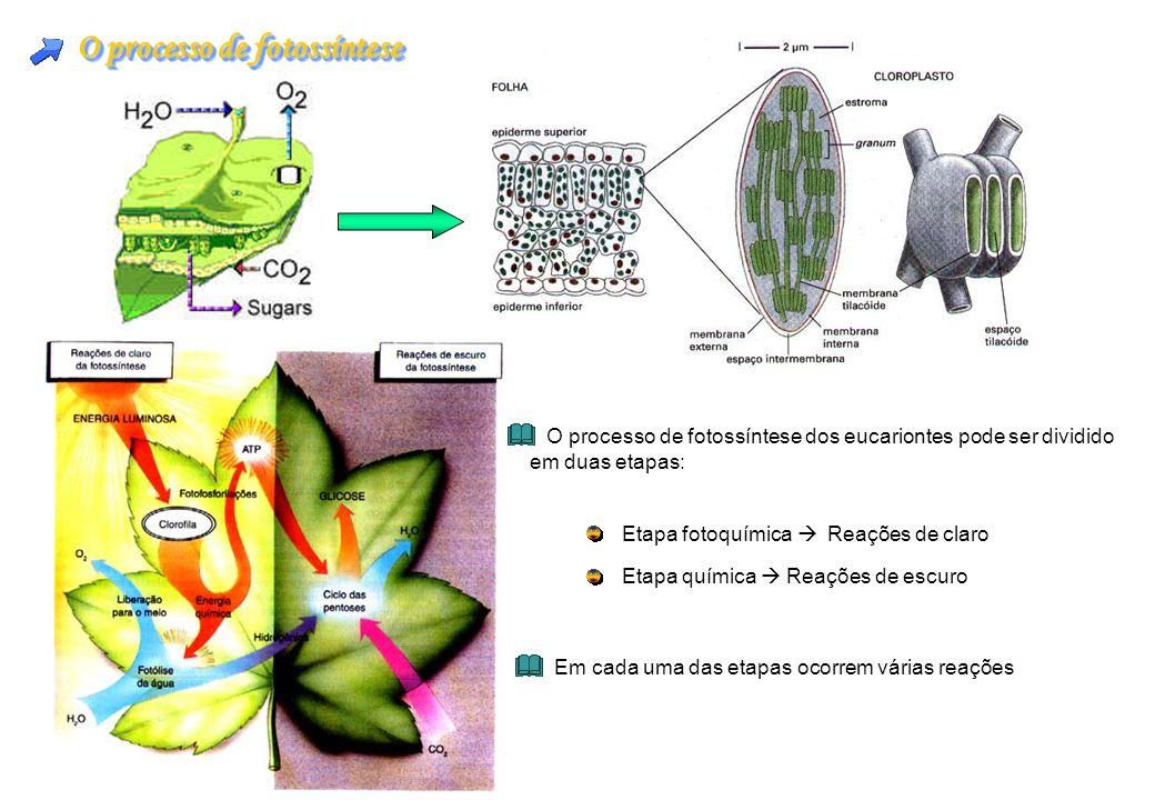 O processo de fotossíntese