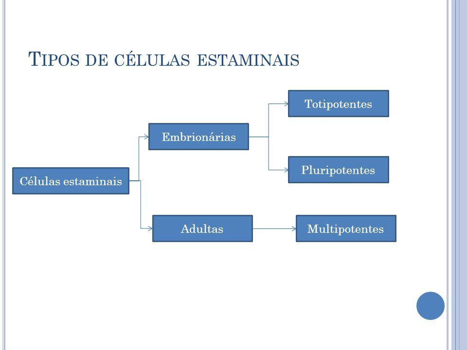 Tipos de células estaminais