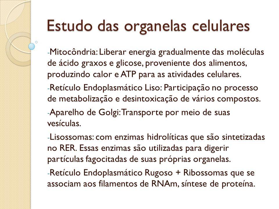 Estudo das organelas celulares