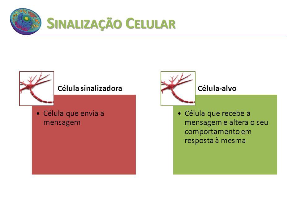 Sinalização Celular Célula sinalizadora Célula que envia a mensagem