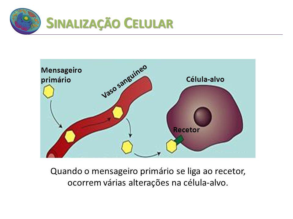 Sinalização Celular Vaso sanguíneo. Mensageiro primário. Célula-alvo. Recetor.