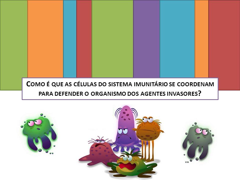 Como é que as células do sistema imunitário se coordenam para defender o organismo dos agentes invasores