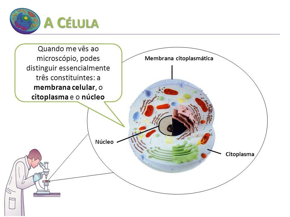 Membrana citoplasmática