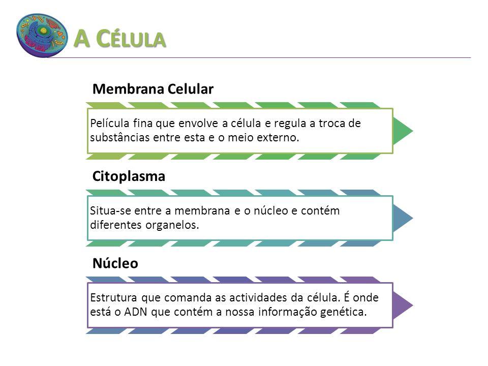 A Célula Membrana Celular Citoplasma Núcleo