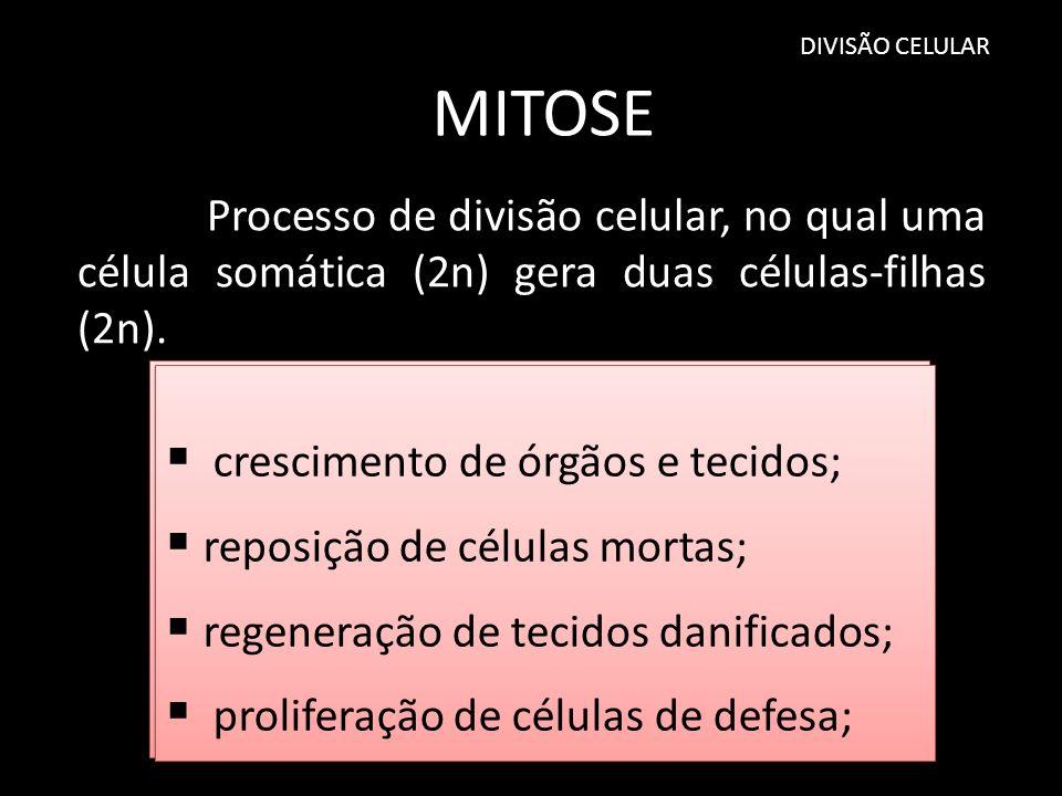 DIVISÃO CELULAR MITOSE. Processo de divisão celular, no qual uma célula somática (2n) gera duas células-filhas (2n).