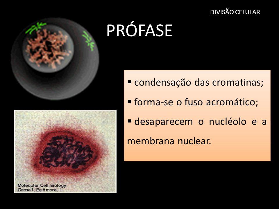 PRÓFASE condensação das cromatinas; forma-se o fuso acromático;