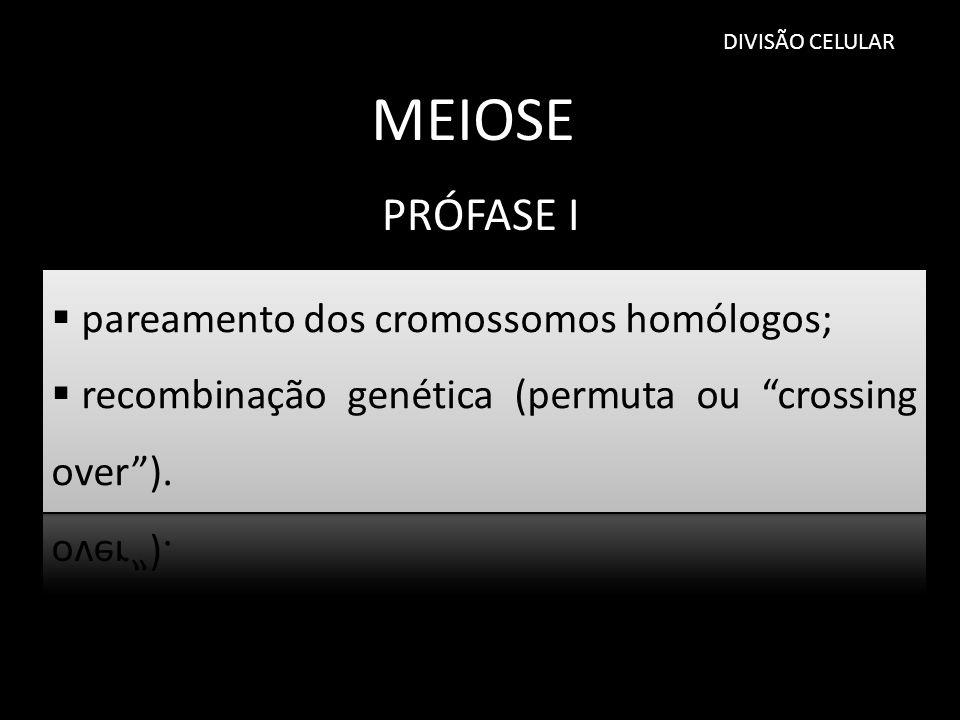 MEIOSE PRÓFASE I pareamento dos cromossomos homólogos;