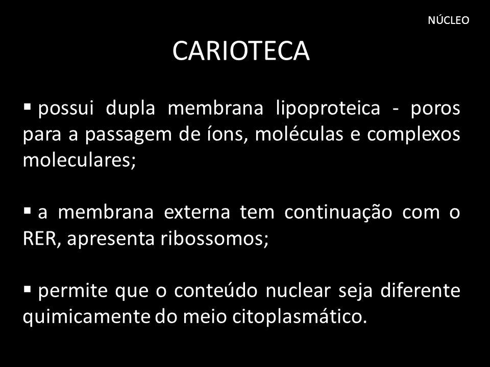 NÚCLEO CARIOTECA. possui dupla membrana lipoproteica - poros para a passagem de íons, moléculas e complexos moleculares;