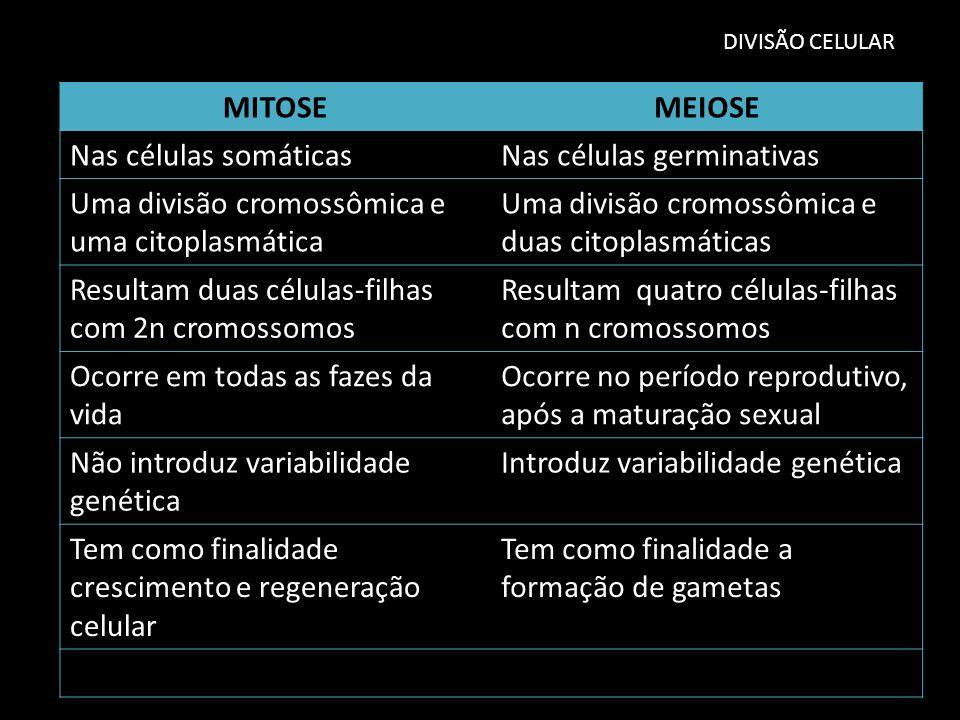 Nas células germinativas Uma divisão cromossômica e uma citoplasmática