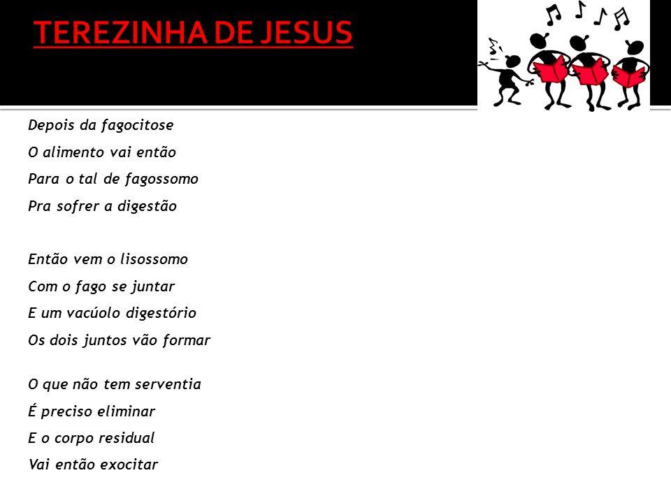TEREZINHA DE JESUS Depois da fagocitose O alimento vai então