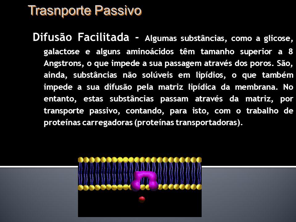 Trasnporte Passivo