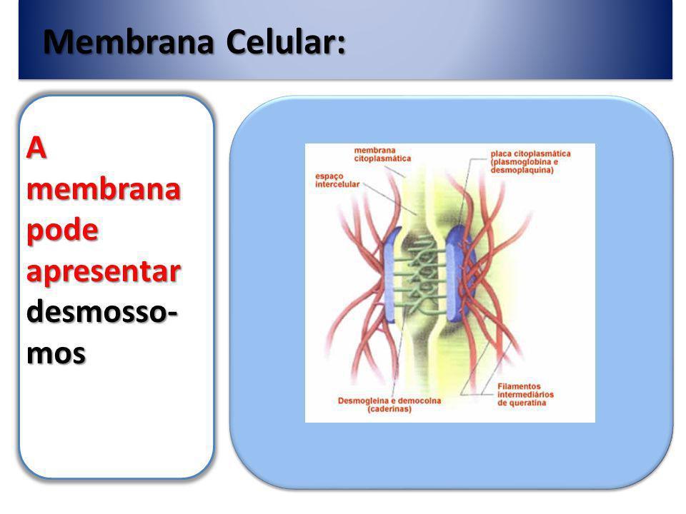 Membrana Celular: A membrana pode apresentar desmosso-mos