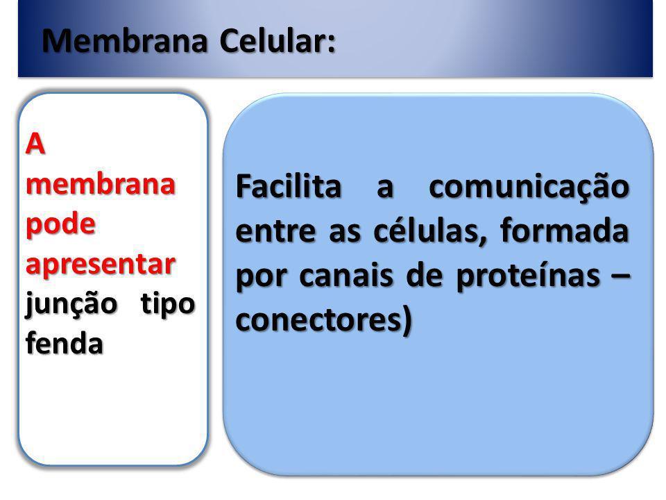 Membrana Celular: A membrana pode apresentar junção tipo fenda.